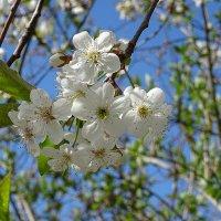 Весна пришла... :: Виктор Стельник