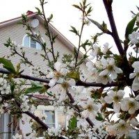 Весна пришла ,сады цветут! :: Лара ***