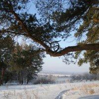вид на реку Оку :: Анна Воробьева