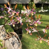 Орхидеи на Мальдивах. :: Татьяна Калинкина