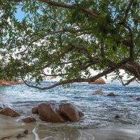 Seychelles, Praslin, Anse Lazio :: Дмитрий Лаудин