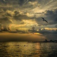 Вечерние купания :: Александр Бойко