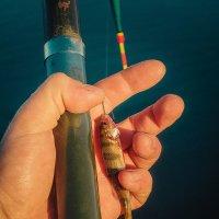 К слову, о рыбалке... :: Александр Ивашков