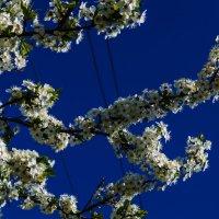 небесные кружева :: Роза Бара
