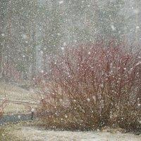 Майский снегопад. :: Лилия Гудкова