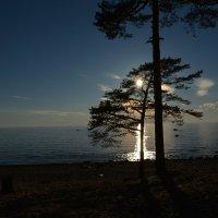 солнечное дерево :: Валентина Папилова