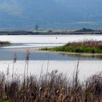 Озёра долины Хула. Израиль. :: Надя Кушнир