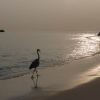 Утренний променад.Мальдивы. :: Татьяна Калинкина