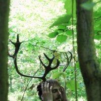 Хранитель леса :: Юля Грек