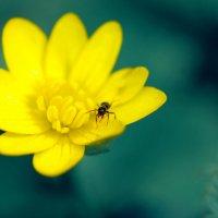 муравьишко :: Мария Ставцева
