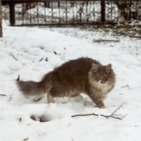 кошка :: 6х9 Kolesik