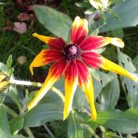 Просто красивый, мохнатый цветок :: Андрей Кротов