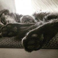 Сны кота :: Ольга Токмакова