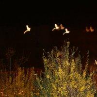 Жар птицы :: Игорь Кубай