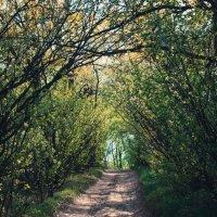 Весна в Саратове :: Валерио Head