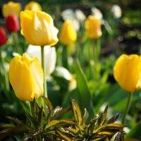 весна-2 :: Евгений Евгений