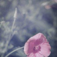 В розовом свете... :: Лариса Н