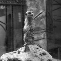 Зоопарк, а привычки те же... :: Владимир Безбородов