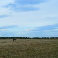 Конь :: Таня Бакулина