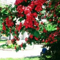 В тени майских деревьев (Киев) :: Наталия Каминская