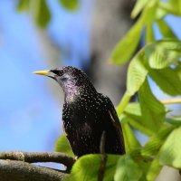 Внимание,сейчас вылетит птичка! :: Paparazzi