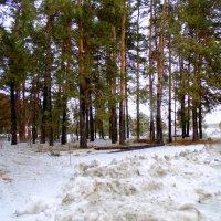 Весна -30 марта , чтоб не забывали о холоде ! :: Мила Бовкун