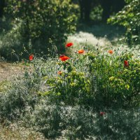 Волшебство майского утра :: Nyusha