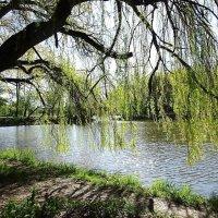 Майским утром в парке :: Маргарита Батырева