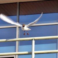 Взлёт чайки :: Падонагъ MAX