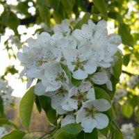 цветы :: Eva Dark13
