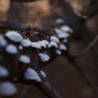 грибы :: Кристина Юричковская