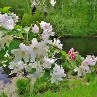 У реки , на окраине села :: Святец Вячеслав