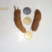 Юмор земной экономики: Кошачьи кокашки на Марсе на вес золота!... :: Алекс Аро Аро