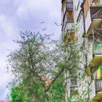 Просто краски весны :: Андрей Михайлин