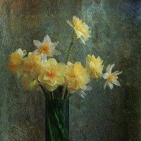 Нарциссы :: Татьяна Панчешная