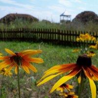 Разговор цветов в палисаднике..) :: Светлана Сейбянова