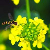 Краски весны :: Евгения Сенченко