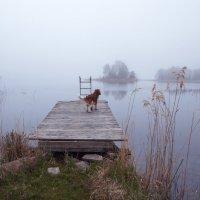 Утро в Бъёркудден :: liudmila drake