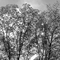За деревьями :: Tanja Gerster