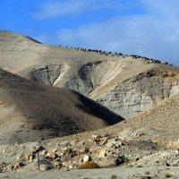 Пустыня Арава. Израиль. :: Надя Кушнир