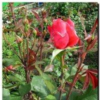 в  саду. :: Ivana