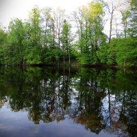 У лесного водоёма.. :: Антонина Гугаева