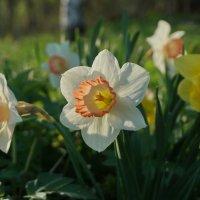 Майские цветочки :: Владимир Гилясев