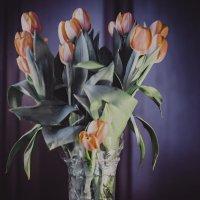 букет тюльпан :: Евгения Назарова