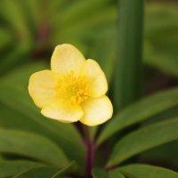 весенний цветок :: геннадий щербак