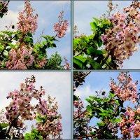 Май в цвету :: Нина Бутко