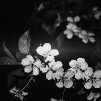 Черная весна :: Алина Давыдова