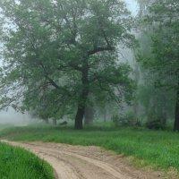 Настойчив утренний туман... :: Лесо-Вед (Баранов)