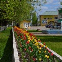 Город Западная Двина. Май 2017... :: Владимир Павлов