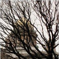 Портрет дерева :: Galina Belugina